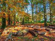 Autumn on Woodbury Common, East Devon