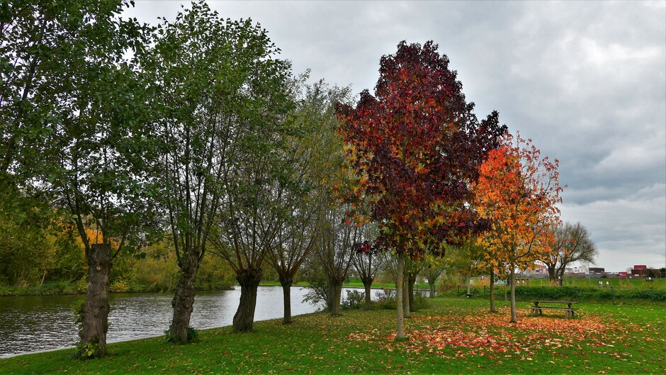 Herfst aan de Linge
