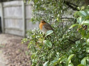 A Beautiful Robin