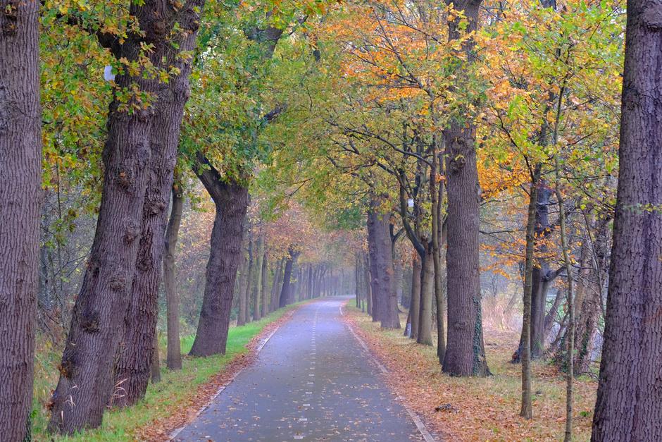 herfst geeft kleur aan grijze ochtend
