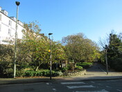 Magnolia tree (opposite Manor Gardens)