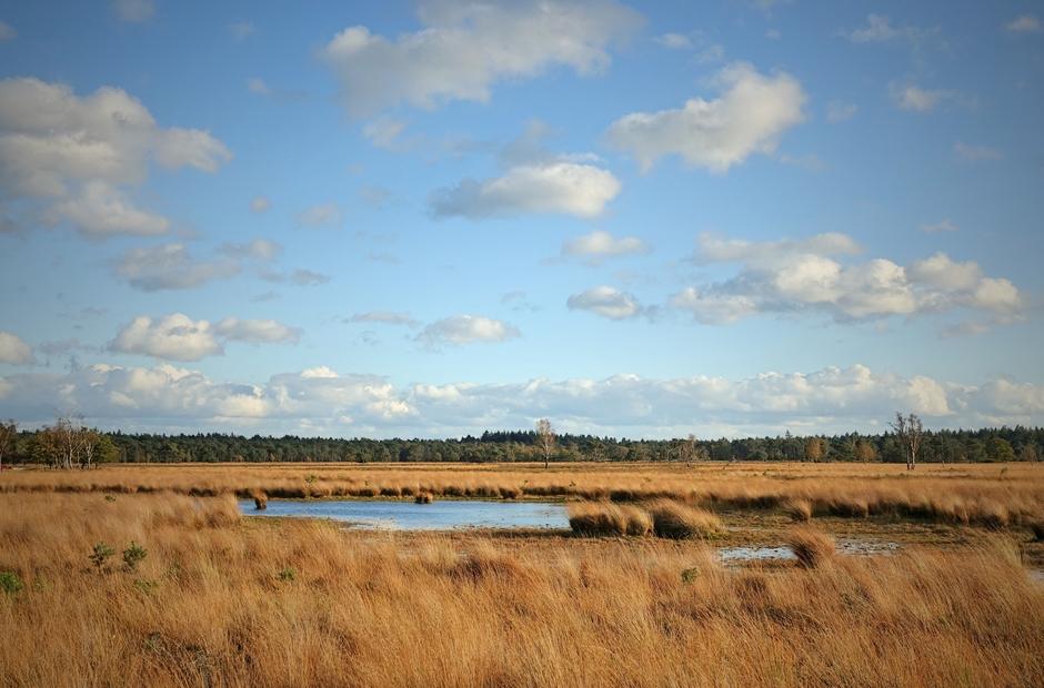 S,middags zon wolken  wolkenstraat en best wat wind op de Heide.