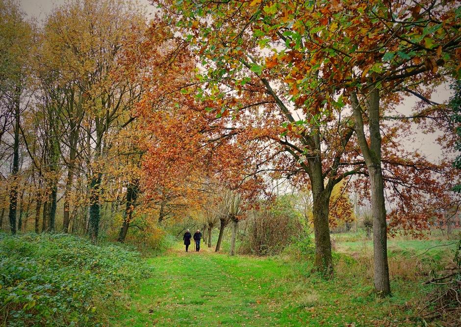 Vanmorgen nog even een wandeling tussen de motregen-buitjes door.