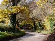 River Otter and the road to Four Elms