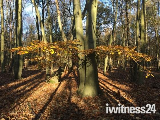 The Woodland tree shadows martlesham woods