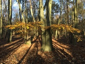 The Woodland tree shadows martlesham woods