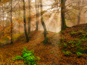 Autumn Fog and Foliage