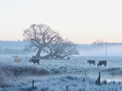Frosty and foggy in Flitcham