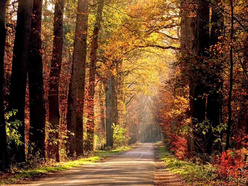 Heerlijk struinen door de bossen op de Sallandse Heuvelrug!
