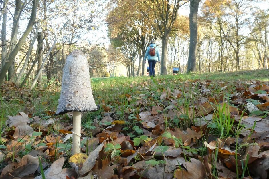 Eenzame paddenstoel.