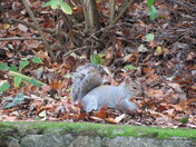 Grey squirrel sightings in Exmouth