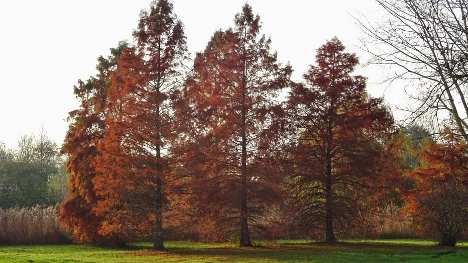 kleurende naaldbomen