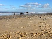 Cromer wet sands walk
