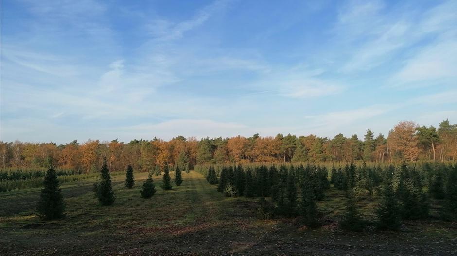 Kerstbomen klaar voor de kerst