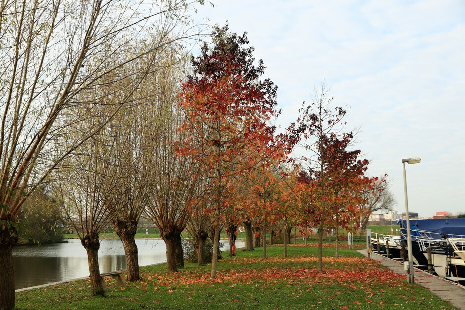 Herfst bij de Linge