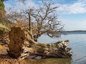 Stutton Ness and the Stour shoreline