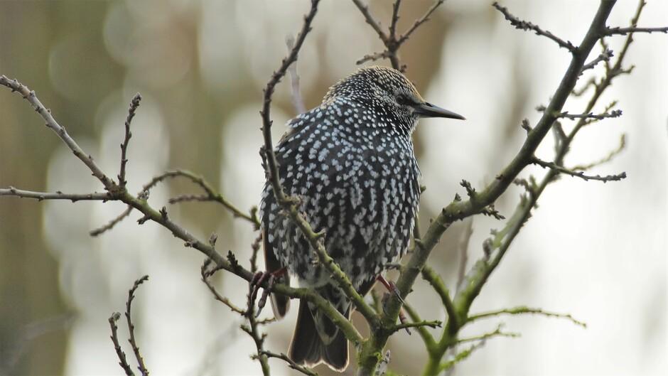 Het koude weer brengt meer vogels naar de tuin