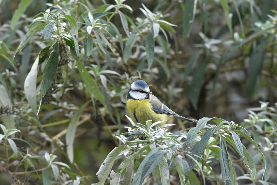De kou brengt meer vogels naar de tuin