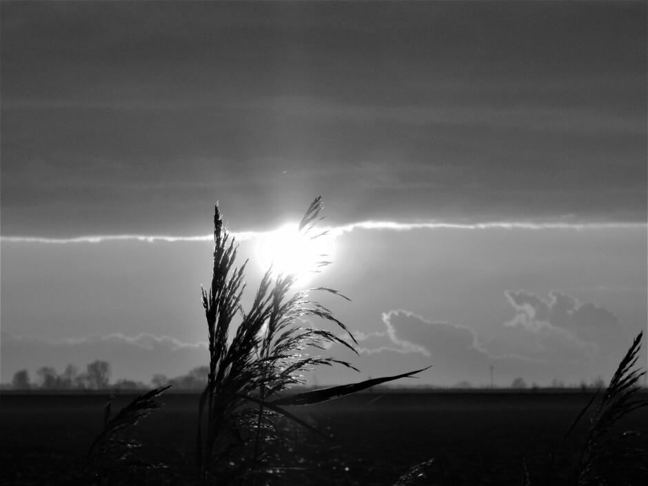 Ondergaande zon in riet