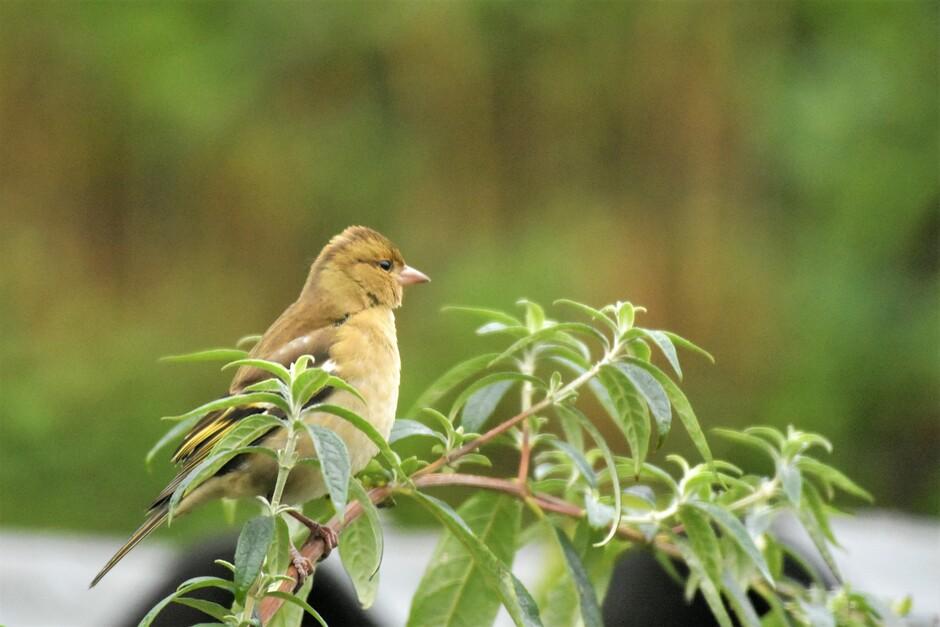 Het koude weer brengt steeds meer vogels naar de tuin