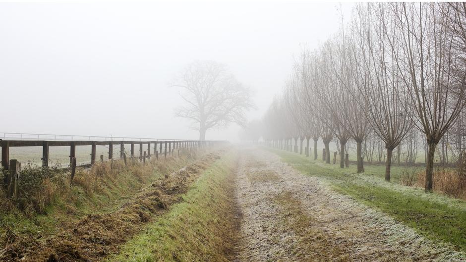 Vorst en mist in de Achterhoek