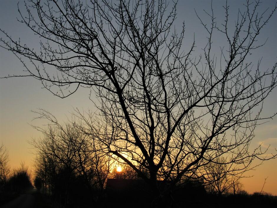 Het avondzonnetje