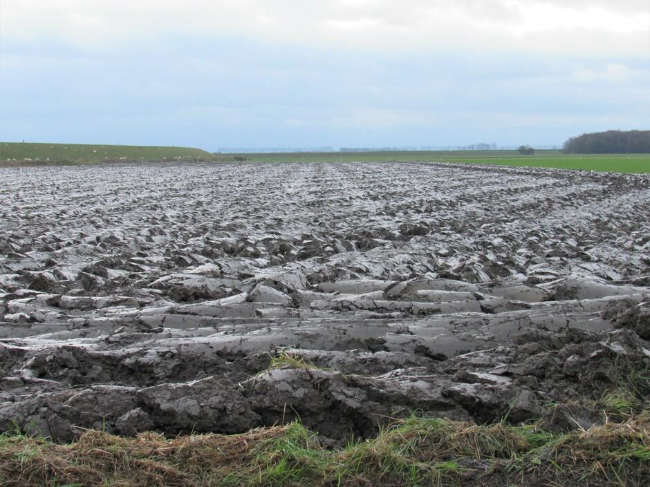 De suikerbieten zijn geoogst en het land is omgeploegd