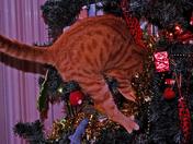 Kitten in a Christmas tree :)