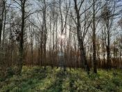 Pigneys Wood