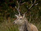 Project 52 - Week 51 - Wildlife