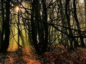 Horsford woods at dawn