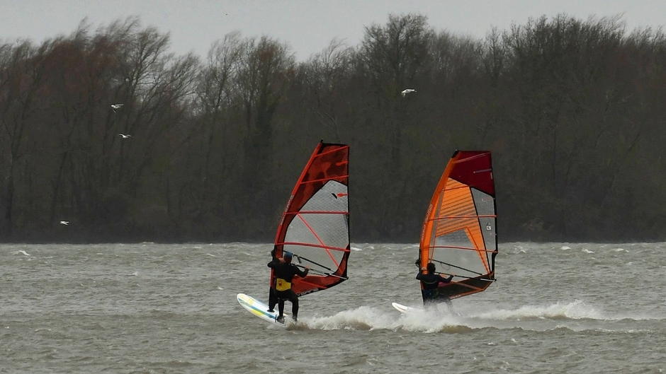 Windsurfers bij strand Horst