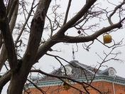 Smiley teapot tree