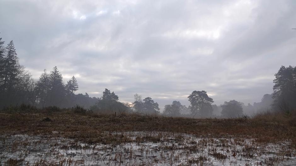 Vanmorgen vroeg in het Zandenbos