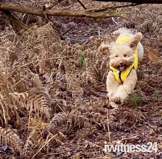 Dog walk at Dunwich Heath with Bella