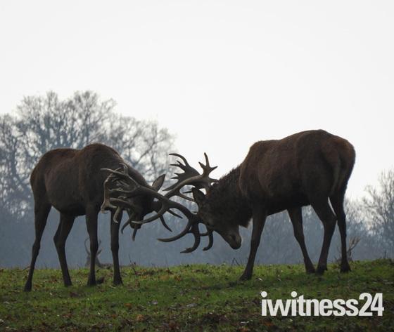 Deer silhouettes at Gunton Park