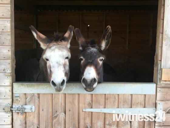 Donkeys can always make people smile
