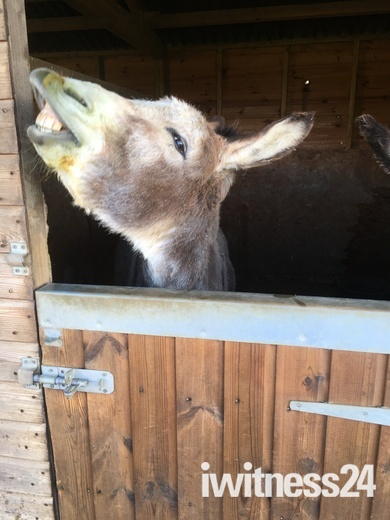 Donkeys can always make people smile