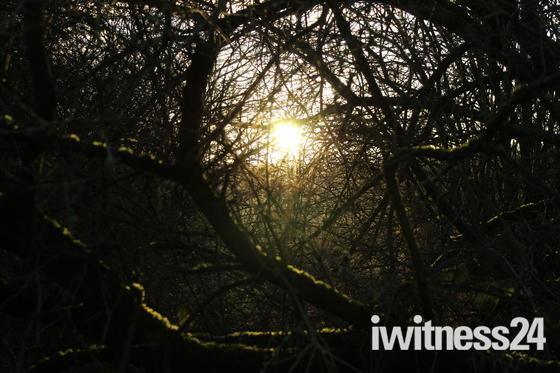 Sun through the thicket