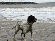 Stormy Sea Palling .Photo by John Paul.