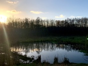 Poringland Community Woodland