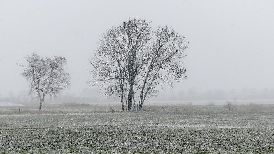 Grijze sneeuwlucht en sneeuwval