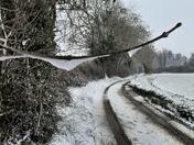 Snow fall in Norfolk