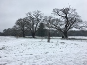 A very cold and snowy Catton Park