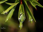 Havering's Winter water drops