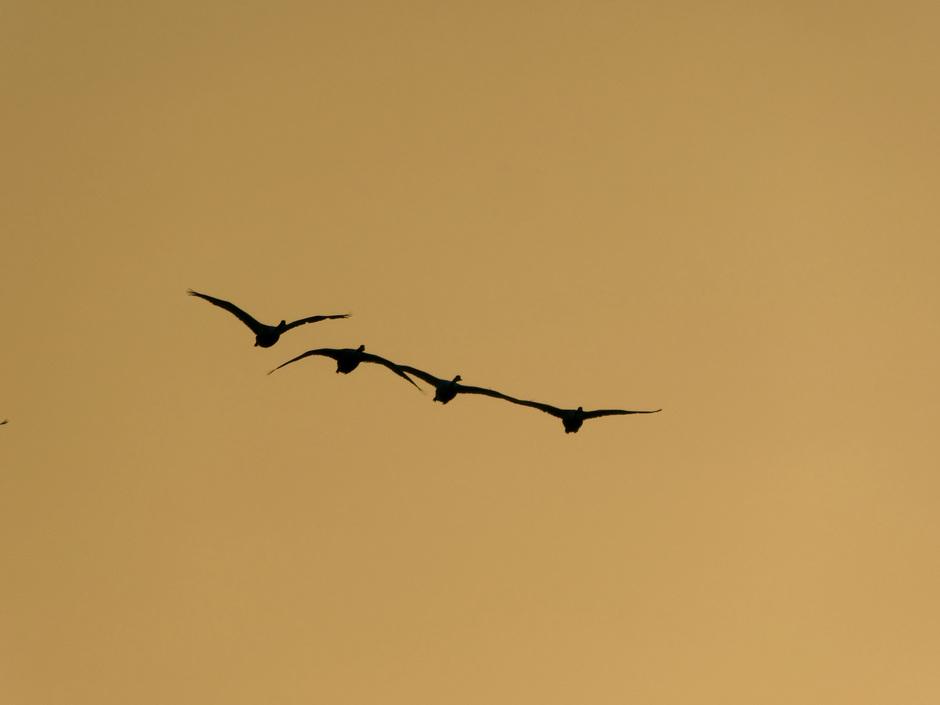 Vogels in vlucht tijdens zonsondergang