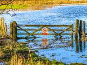 Anyone for a swim