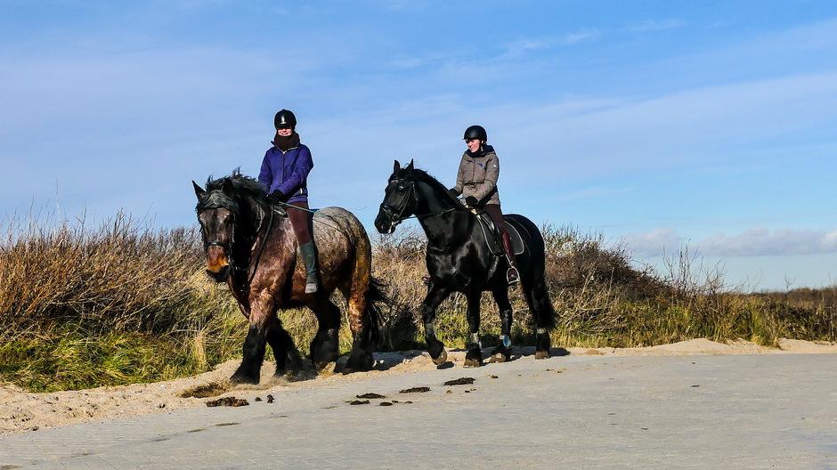 Zonnige dag voor paardritje
