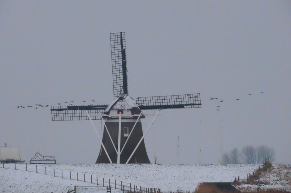 Molen Goliath in de Eemshaven