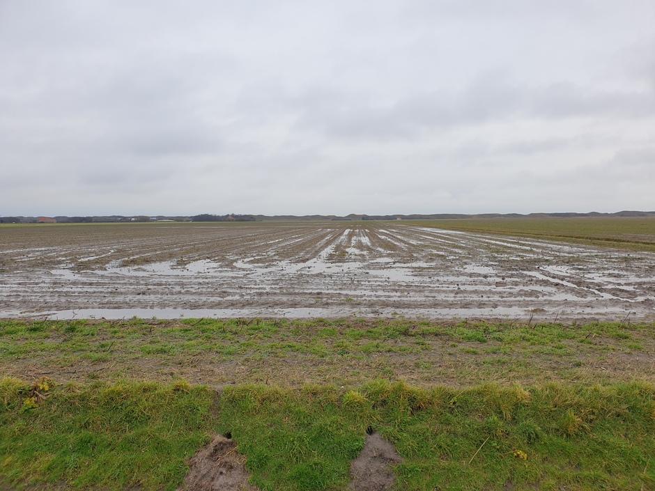 Kleddernat op Texel